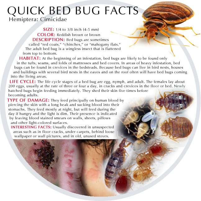 How Can Bed Bugs Live Without